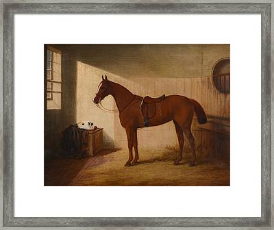 A Chestnut Horse In A Stable Framed Print by Edwin Brown