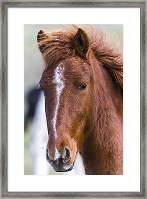 A Chestnut Horse Portrait Framed Print