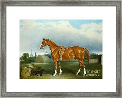 A Chestnut Hunter And A Spaniel By Farm Buildings  Framed Print