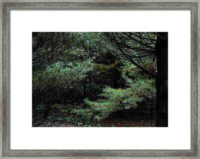 A Clearing In The Wild Framed Print