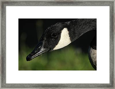 A Close Up Framed Print