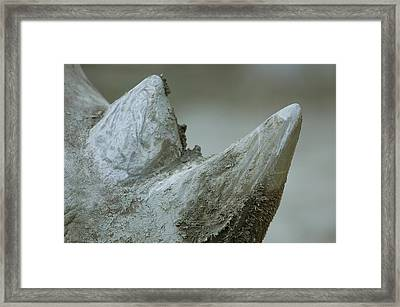 A Close-up View Of A White Rhinos Muddy Framed Print by Joel Sartore