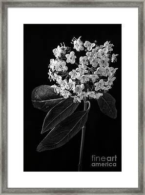 A Cluster Of Tiny Flowers Framed Print
