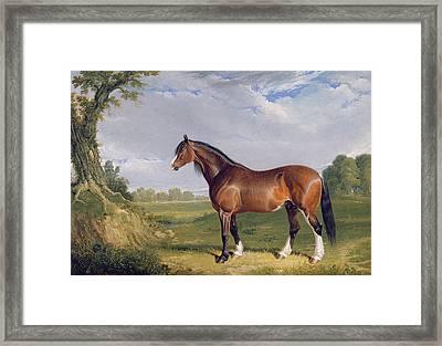 A Clydesdale Stallion Framed Print by John Frederick Herring Snr