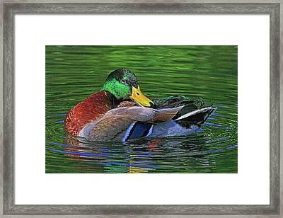 A Coat Of Many Colors Framed Print