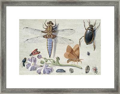 A Cockchafer, Beetle, Woodlice And Other Insects, With A Sprig Of Auricula Framed Print