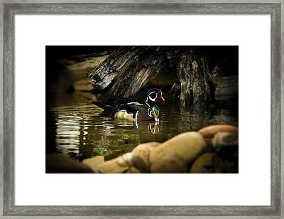 A Cold Drink - Wood Ducks Framed Print