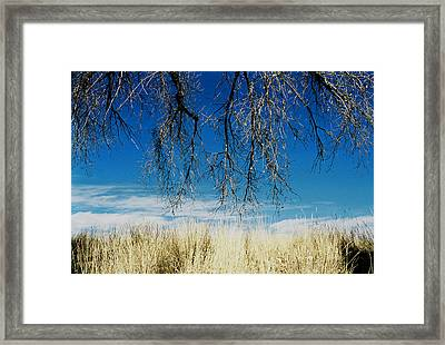A Comfortable Place Framed Print