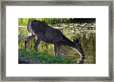 A Cool Drink Framed Print by Bob Christopher
