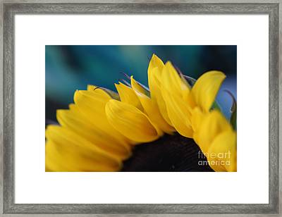 A Cool Sunflower Framed Print