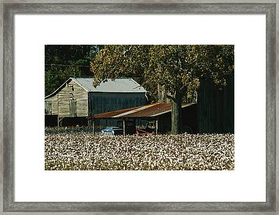 A Cotton Field Surrounds A Small Farm Framed Print
