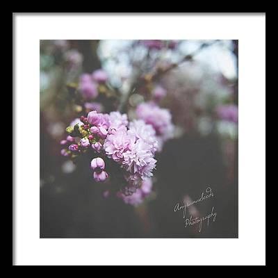 Cherryblossom Framed Prints
