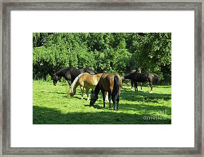 A Couple Of Horses Framed Print by Pit Hermann