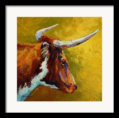 Texas Longhorn Cow Framed Prints