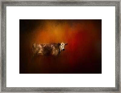 A Cow In Autumn Framed Print by Jai Johnson