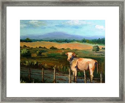 A Cow Up In Missouri Framed Print