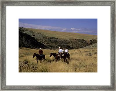 A Cowboy And Friends Herd Cattle Framed Print