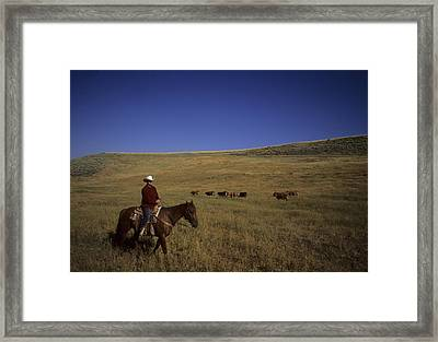 A Cowboy Herds Cattle On A Ranch Framed Print