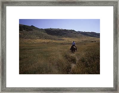 A Cowboy Looks For His Herd Framed Print