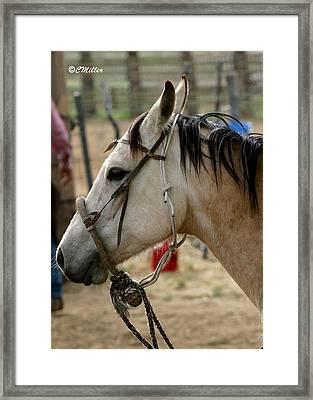 A Cowboys Partner.. Framed Print by Carol Miller