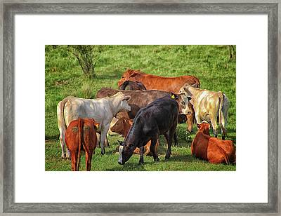 A Cows Backside Framed Print by Martin Newman