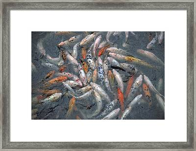 A Coy Pond At The Henry Doorly Zoo Framed Print