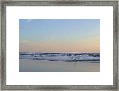 A Crane's New Day Framed Print