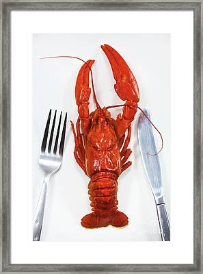 A Crawfish Framed Print