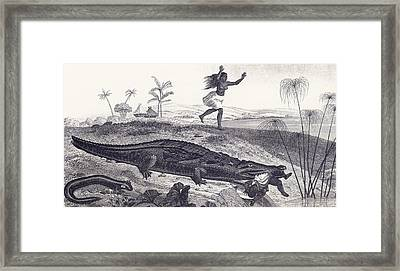 A Crocodile Snatches A Child From An Framed Print by Vintage Design Pics