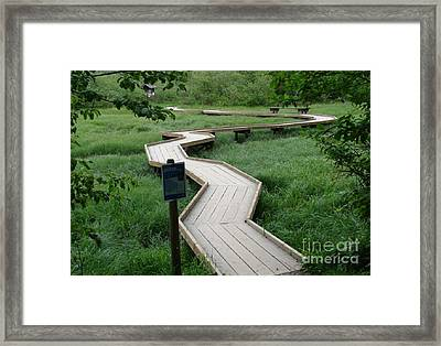 A Crooked Path Framed Print by Rod Jellison
