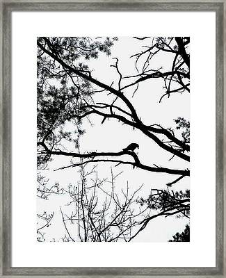 A Crow Shook Down On Me The Dust Of Snow Framed Print by Fareeha Khawaja