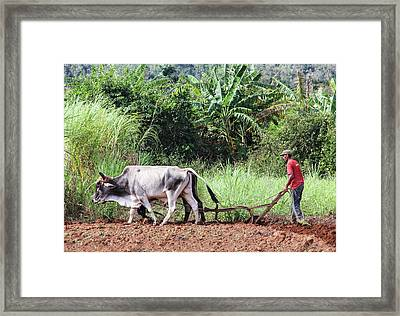 A Cuban Tractor Framed Print