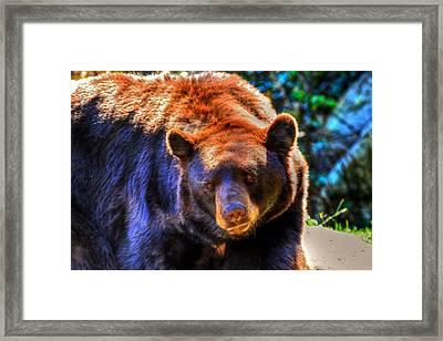 A Curious Black Bear Framed Print