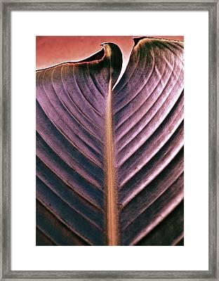 A Cut Above Framed Print by Gwyn Newcombe