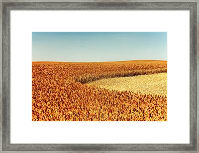 A Cut From Within Framed Print