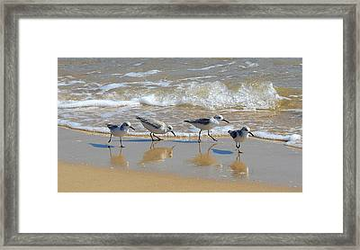 A Cute Quartet Of Sandpipers Framed Print