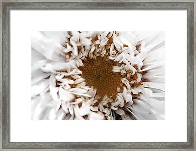 A Daisy Framed Print by Bransen Devey