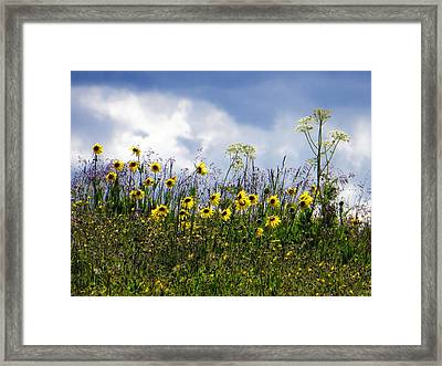 Framed Print featuring the photograph A Daisy Day by Karen Shackles
