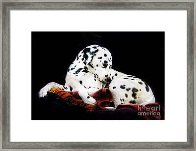 A Dalmatian Prince Framed Print by Blair Stuart