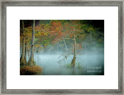 Framed Print featuring the photograph A Dancing Cypress by Iris Greenwell