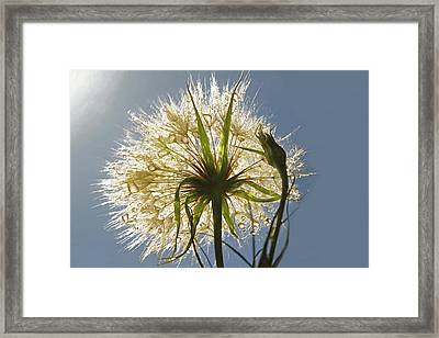 Framed Print featuring the photograph A Dandy New Day by Donna Kennedy
