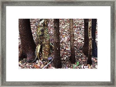 A Dapper Birth In The Midst Of Hemlocks Framed Print by Terrance DePietro