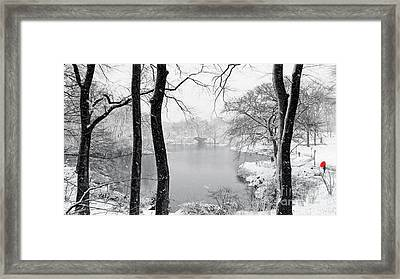 A Dash Of Red Framed Print by Nishanth Gopinathan
