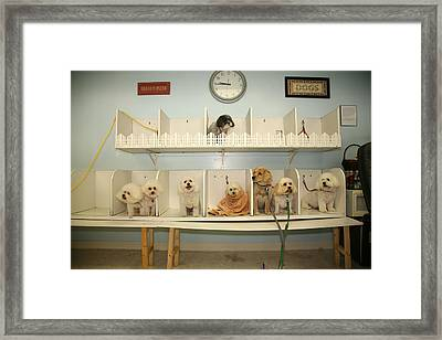 A Day At The Doggie Day Spa Framed Print