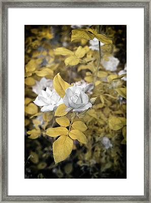 A Day In The Garden Framed Print