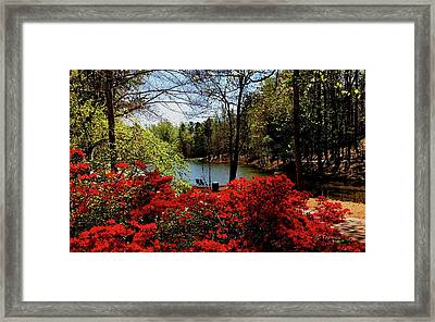 A Day In The Park Framed Print