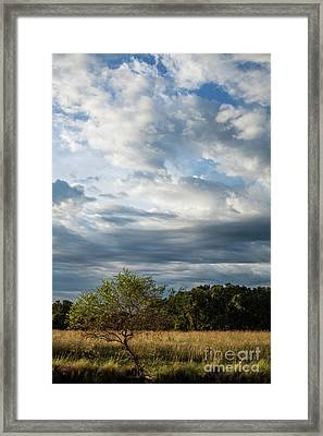 Framed Print featuring the photograph A Day In The Prairie by Iris Greenwell