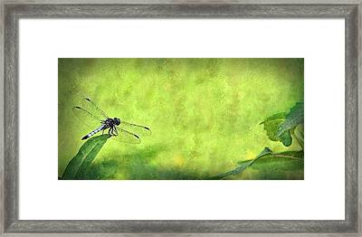 Framed Print featuring the photograph A Day In The Swamp by Mark Fuller