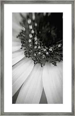 A Deeper Look Framed Print