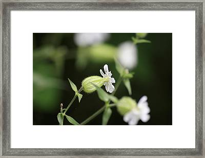 A Delicate Balance Framed Print by Alan Rutherford